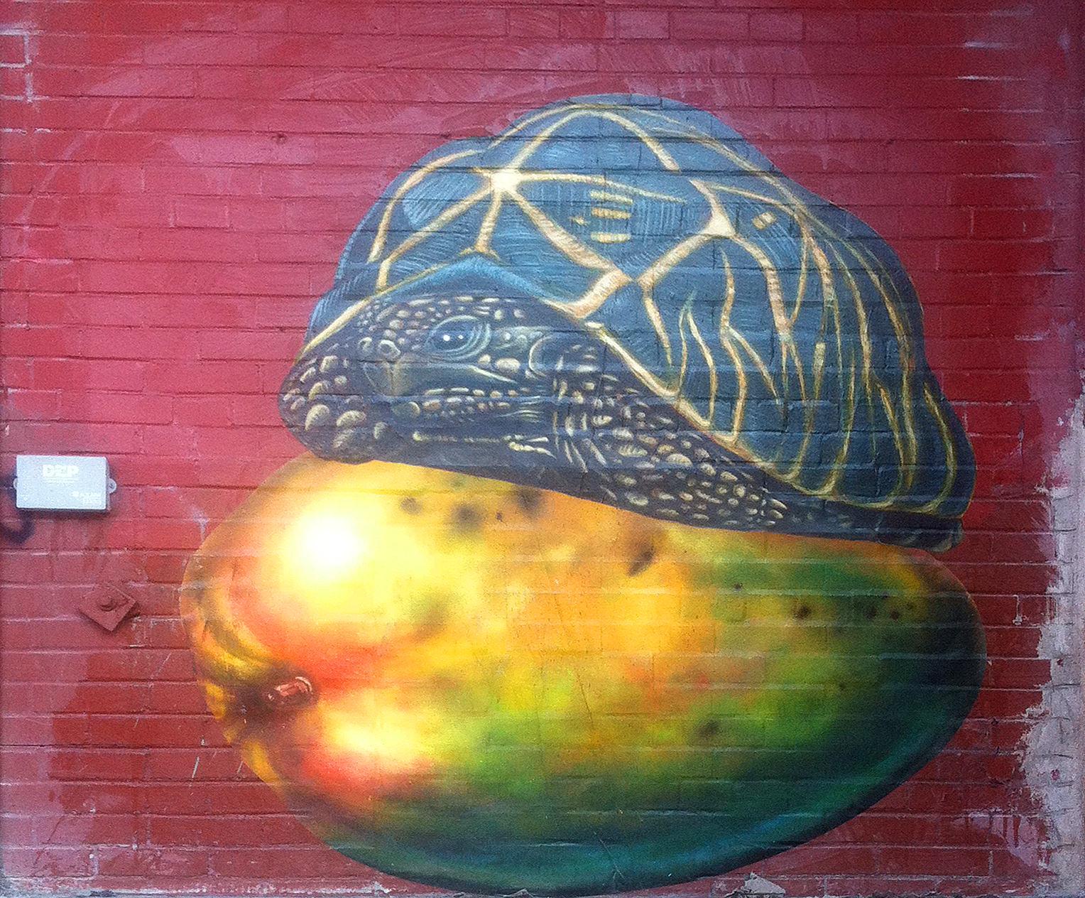 turtle mango